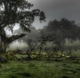 Dehesa-y-niebla-Eduardo-Moreno-Pérez