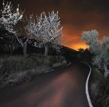 Cerezo-en-flor-nocturno-Nano-Corrales-Martinez