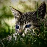 Un-gato-astuaino-Guillermo-Castuera-Manzano