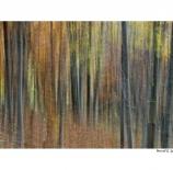 Colores-de-otoño-Manuel-García-Izquierdo