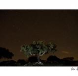 Noche-estrellada-Victor-M.-Álvarez-Bernal