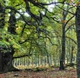 bosque-encantado-amalia-mart%c3%adn-garc%c3%ada-luis