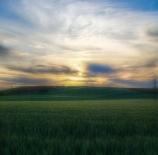 campo-de-cereales-fernando-redondo-dom%c3%adnguez