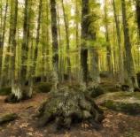 magical-forest-mario-el%c3%adas-mu%c3%b1oz-valencia