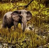 safari-a-la-puerta-de-casa-jes%c3%bas-tirado-gonz%c3%a1lez