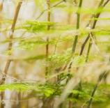 Green garden - Nano Cava