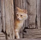 Gato-verato-fmarinnano