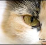 Miradas-felinas-Rosso