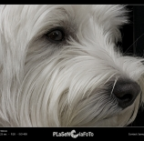 Un-perro-Samuel