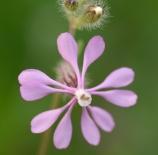 florecillas-fmarinnano