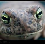 Los-ojos-del-sapo-Malias