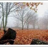tronco-y-niebla-nano