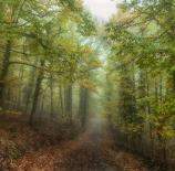 Bosque-encantado-Miguel-López-Rina-scaled