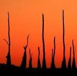 Burning-trees-Álvaro-Heras-Mateos-scaled