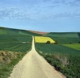 Camino-Amalia-Martín-García-Luis-scaled